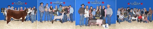 hays county livestock